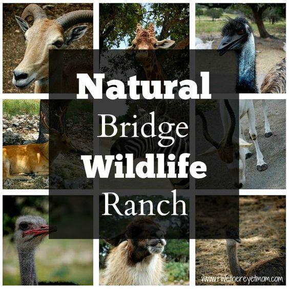 A look at the Natural Bridge Wildlife Ranch in San Antonio, Texas.