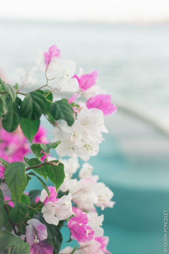 Sofitel Bora Bora Marara Beach Resort Olivia Poncelet Paradise Travel Sea Pastel Dream flower
