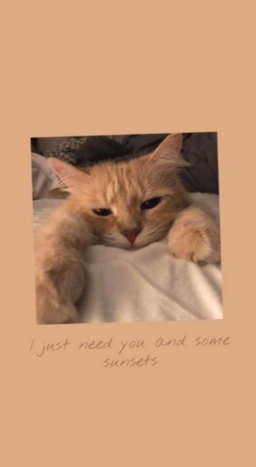 6 Cute Animals Background Cartoon Gambar Hewan Lucu Anak Kucing Menggemaskan Fotografi Hewan