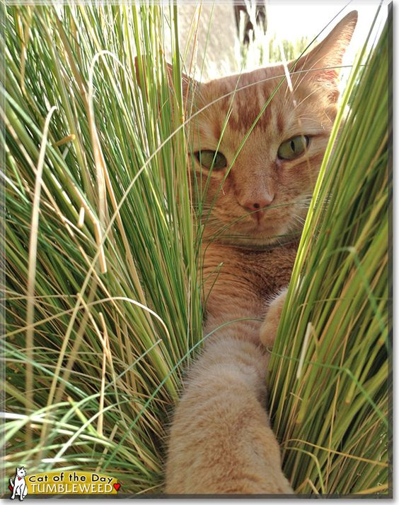 """A cat in grass is a tiger in the jungle."" --British Proverb:"