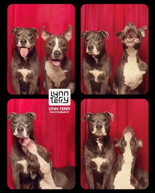 Lynn Terry's dog photo booth is amazing!