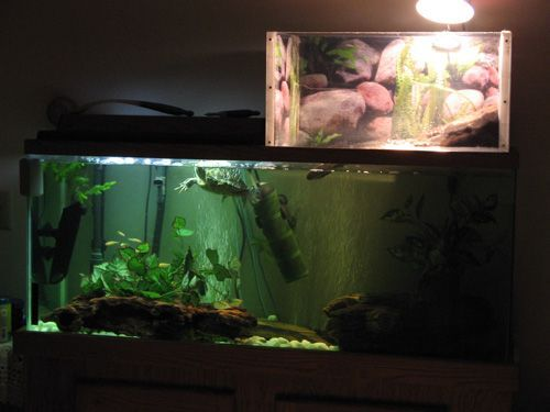 ♥ Pet Turtle ♥ Check out this turtle topper above tank basking platform. Nicely enclosed for the safety of your turtle ~ pet care.: