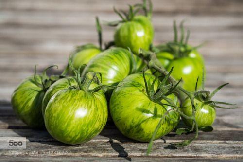 Homegrown Green Tomatoes by ah-ra  IFTTT 500px Deutschland Eifel Ernte Früchte Garten Garden Gemüse Germany Harvest Macro Makro Obst