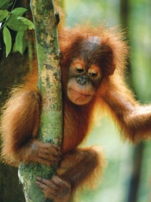 Image result for what's driving deforestation