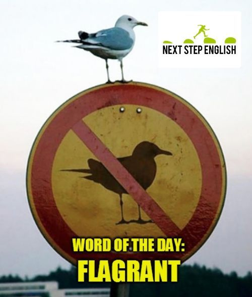 Flagrant Meaning Examples For Advanced English Language Learners In 2020 Funny Animal Quotes Funny Animal Pictures Like A Boss