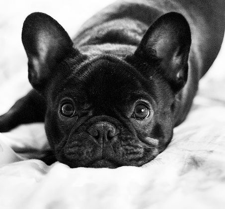 frenchie-look :)