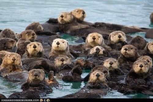 Otters!: God S Creatures, Adorable Animals, Funny Pictures, Cute Animals, Funny Stuff, Funny Animal, Nature S, Sea Otters, Otterly Adorable