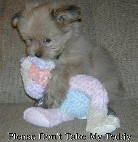 Please Don't Take My Teddy