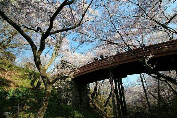 #桜 #高遠 #sakura #cherryblossom #japan