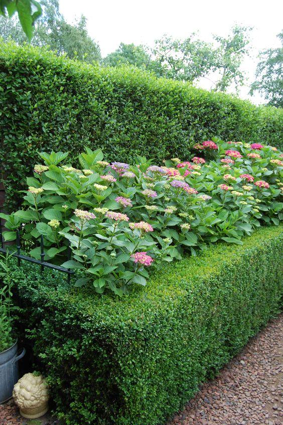Buxus haag, hortensia's in de prachtigste kleuren....,