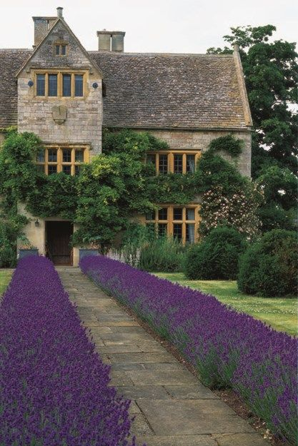Front Path Lined With Clipped Lavender Garden
