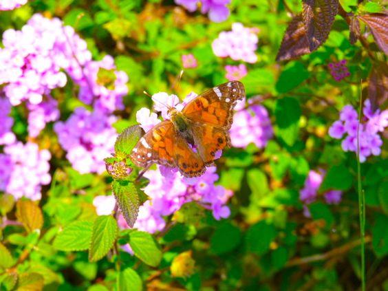 butterflyyy!