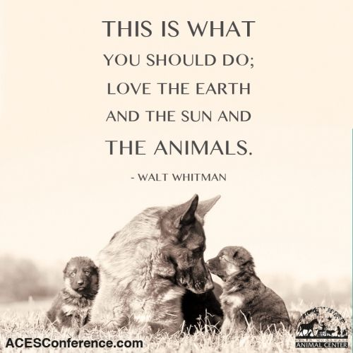 ~ This is What you should do; Love the Earth and the SUN and THE ANIMALS…