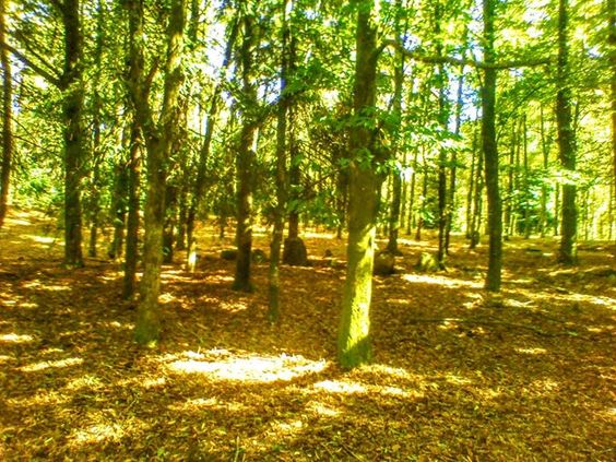 Boa tarde :D Calor e céu limpo já com a  mistura dos tons quentes e fortes do Outono. A Travanca em Arcos de  na tarde ontem