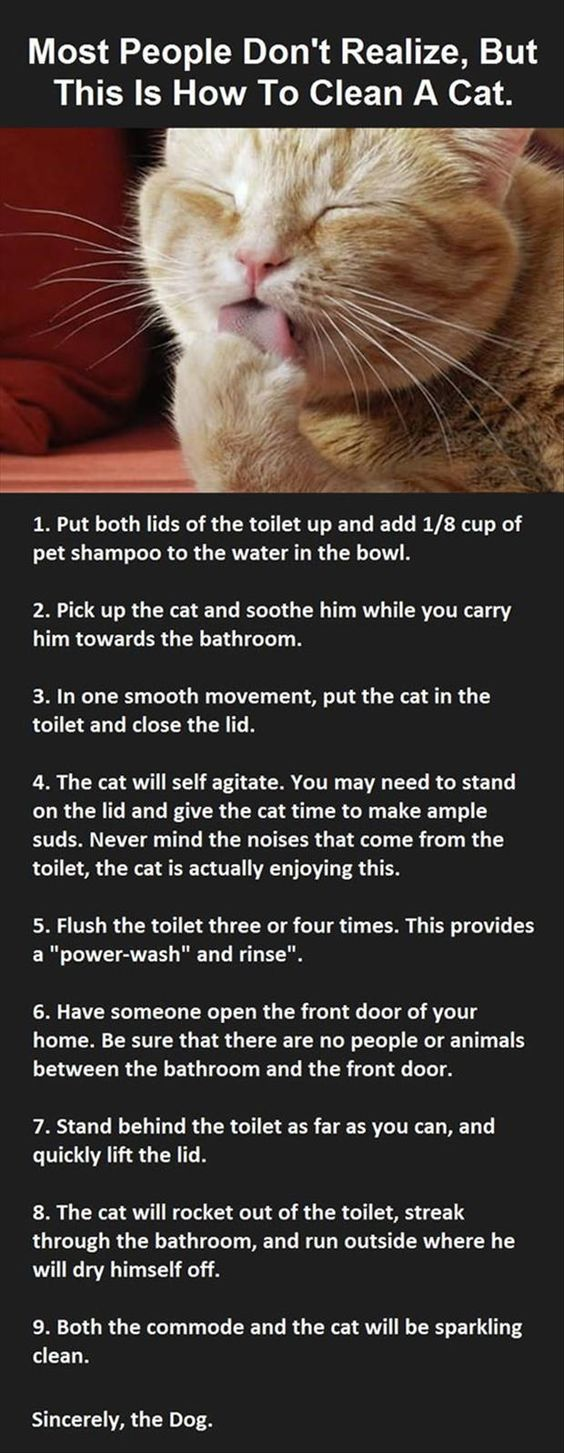 funny how to clean a cat: