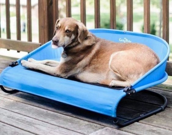 Keep Your Dog Cool With These 12 Summer Must Haves Dogs Cool Pets Your Dog