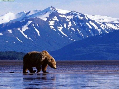 Bear Jesus! Walking on water!