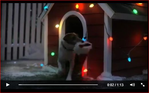 Whether you have a dog or not, you will love this! https://www.facebook.com/profile.php?id=100004654036138 https://www.facebook.com/bewarmers/videos/vb.106356299474820/457548267688953/?type=2&theater