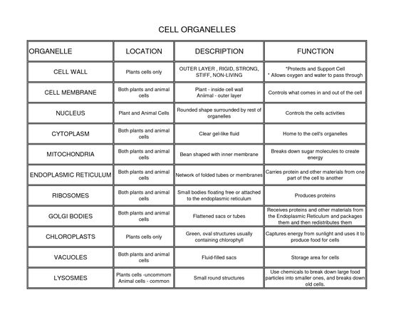 Cell biology essay questions