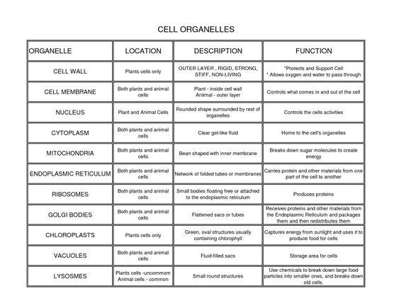 Cell essay