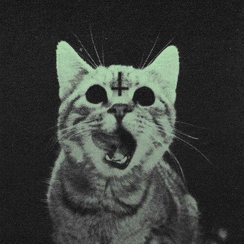 My Grinning Mind Gracious Evil Black Cat Cute Anime Cat Cat Wallpaper Cute Cat Wallpaper