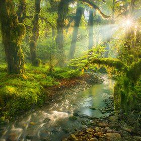 Beautiful & Enchanted...