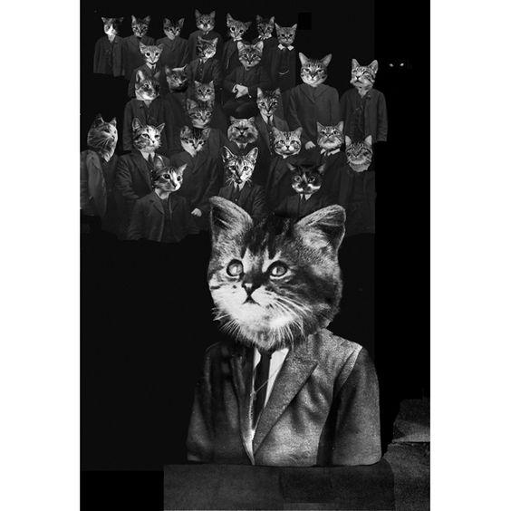 illustration by matthew richardson, from 'meowmorphosis' (kafka's 'metamorphosis' with kittens)