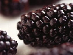 blackberries and raspberries - info from Ron