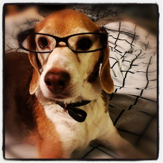 My old beagle :)