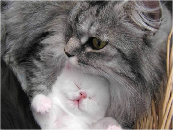 Kitty with a cat - 23 Photo (6)