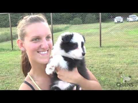 L Evolution D Un Border Collie De 7 Semaines A 1 An Iris Et Laure Notre Aventure Youtube Dog Popsicles Dogs Popsicles