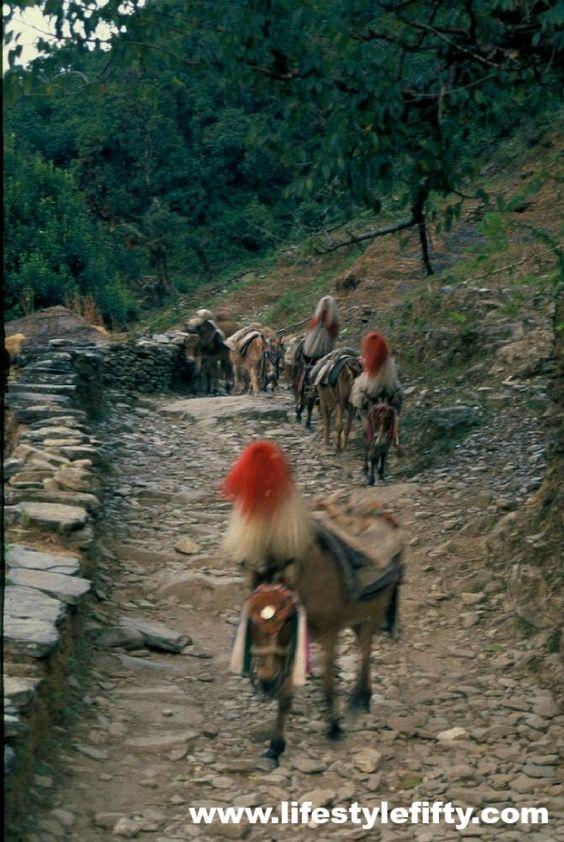 Nepal-Jo-Castro