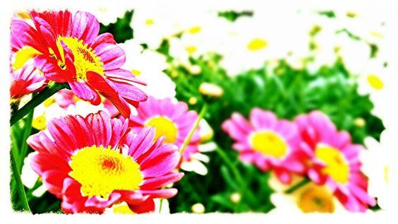 Blumenladen Fotografie