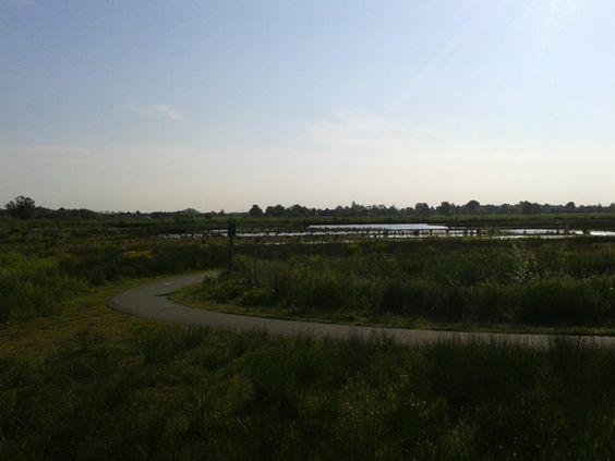 Jong stuk natuur en recreatie tussen Leusden en Amersfoort. Een kadootje het dagelijkse fietstochtje hier doorheen naar het werk en weer terug naar huis. Locatie: Stoutenburg. Foto: Tineke Brink-Jansen.