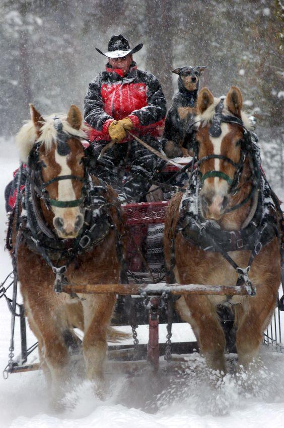 Michigan christmas tree farms lots hayrides sleigh