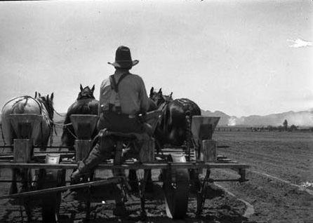 Tilling the soil on the Halverson farm, 1925. The Halverson farm was located in Zelzah (now Northridge) near the present site of the California State University, Northridge campus. Homer Halverson Collection. San Fernando Valley History Digital Library.