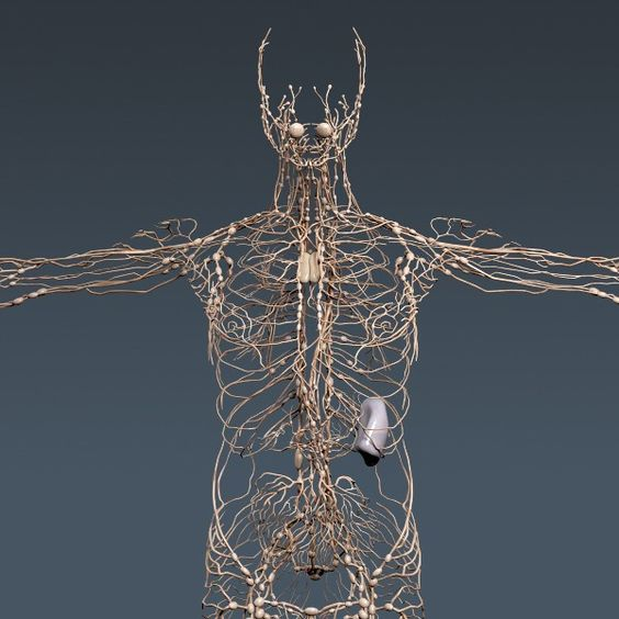 Human Lymphatic System -not complicated at all;P