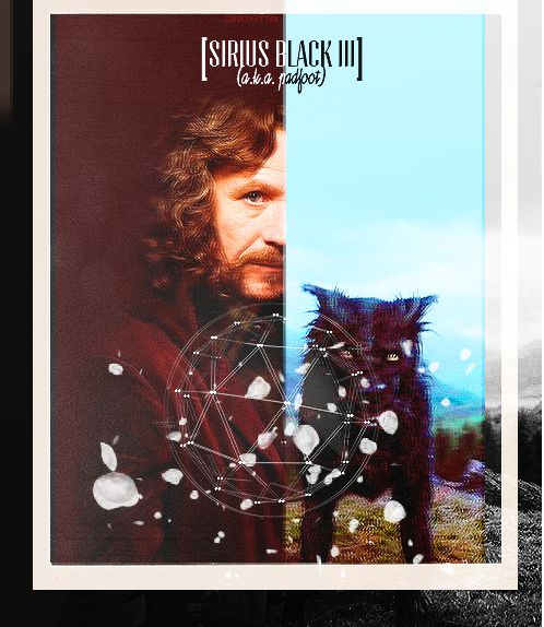 Sirius Black III/Padfoot