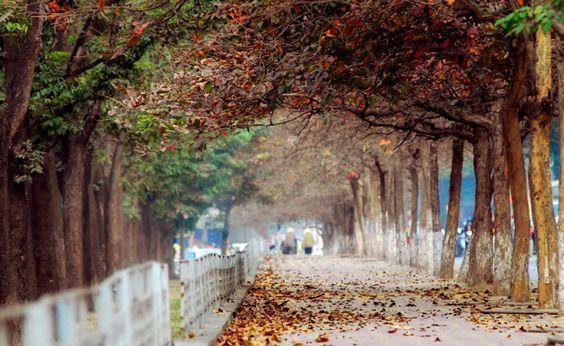 Những con đường đẹp đến nao lòng mỗi độ thu Hà Nội