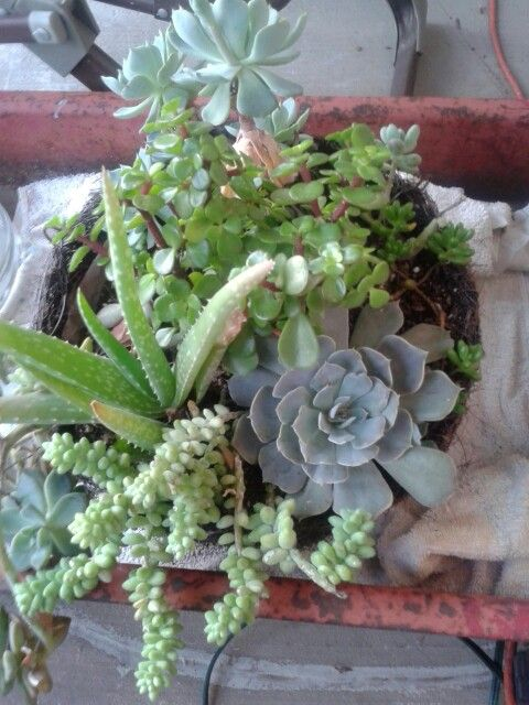 Plant: