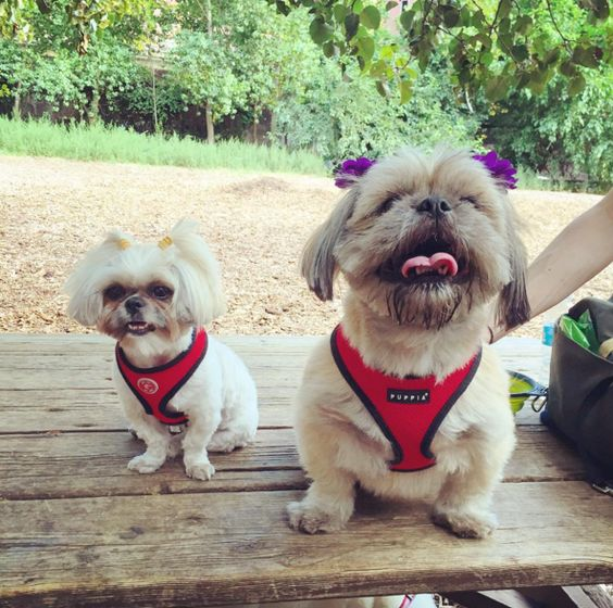 Best in Brooklyn: Check Out These 10 Dog Parks