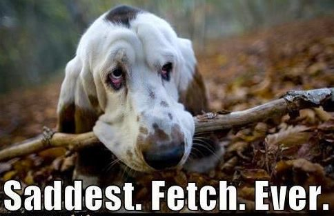 Makes me sad 4 sure: Hound Dog, Bassett Hound, Sad Face, Saddest Fetch, Funny Animal, Bassethound, Man