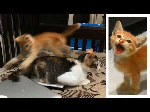 Hungry Kitten Wants To Eat Cat Tail Cats Meowing Feel Free To Subscribe Share And Like Hungry Kitten Wants To Eat Cat Ta In 2020 Cat Tail Kittens Funny Pregnant Cat