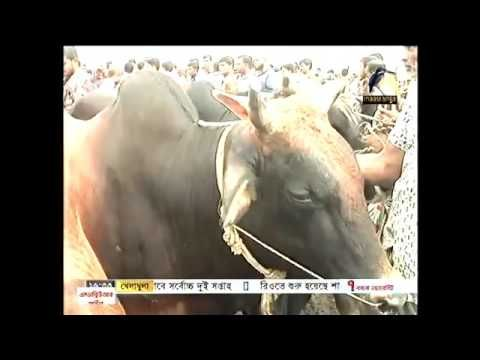 BD Latest English News 8 September 2016 Online Bangladesh News Today #banglanews #bangla #news #banglatvnews #latestbanglanews #onlinebanglanews #bangladeshnews