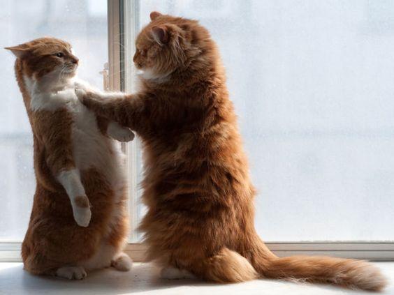 【画像10枚】にゃんこだって立てるんだぞ、覚えておけよ!分かったな?|ペットフィルム -ペットのおもしろ 可愛い画像・動画まとめ petfilm.biz