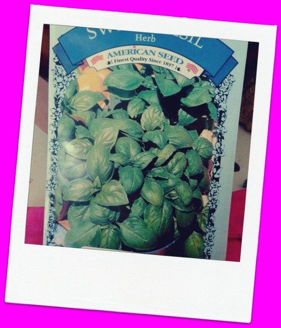 Seeds: