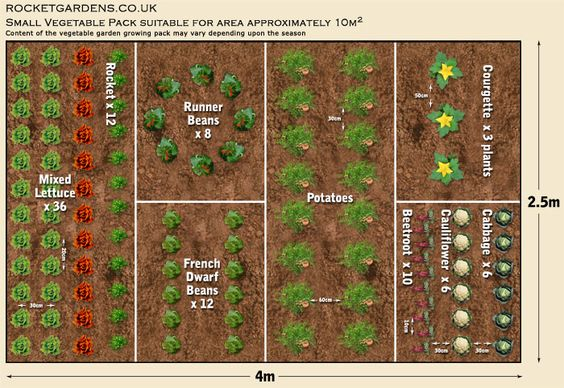 Small vegetable garden layout small vegetable garden for Vegetable garden design layout