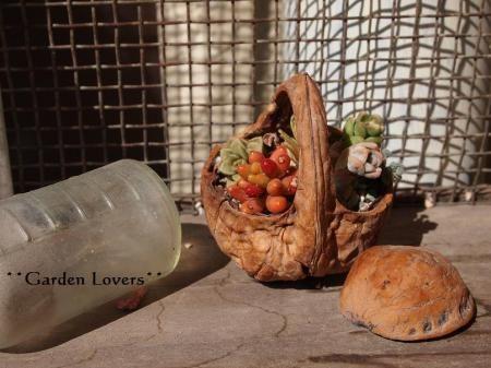 walnut succulent