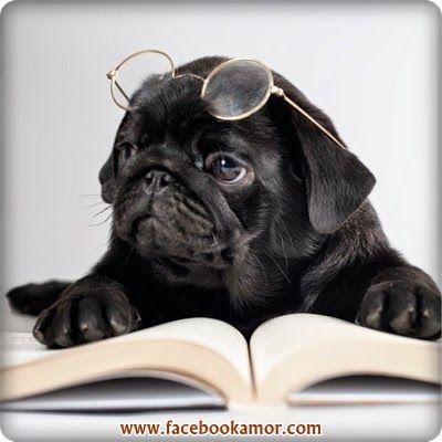 Lindo perro leyendo libro
