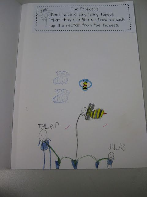 Classroom Fun: Bees, Bees, Bees! students use straws and then write/draw
